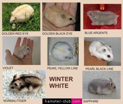Russian Winter White Colors