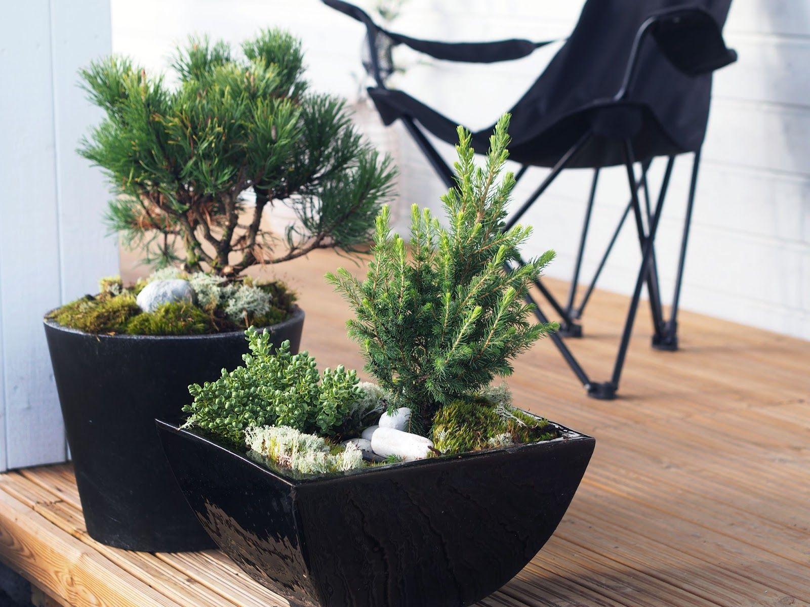 Yksinkertaiset, japanilaistyyliset istutukset
