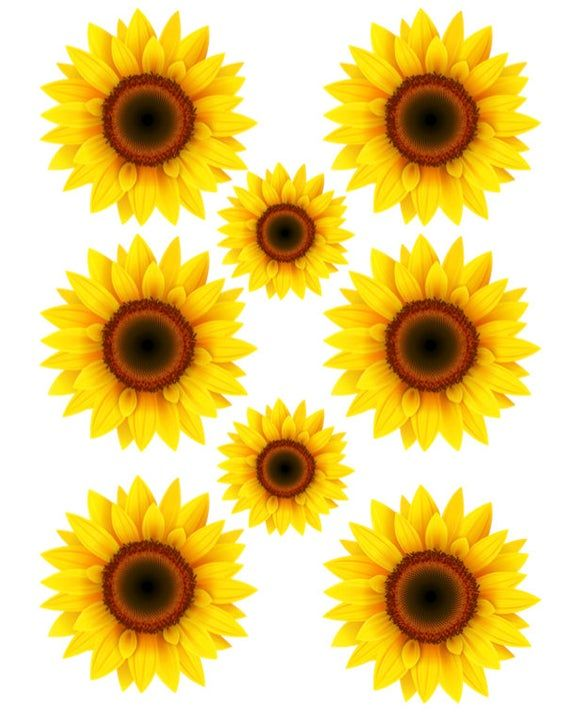 Full Sheet Waterslide Images Sunflowers All Kinds Sizes Sunflowers Laser Printed Laser Decal Laser Decal Waterslide Paper Sunflower Art