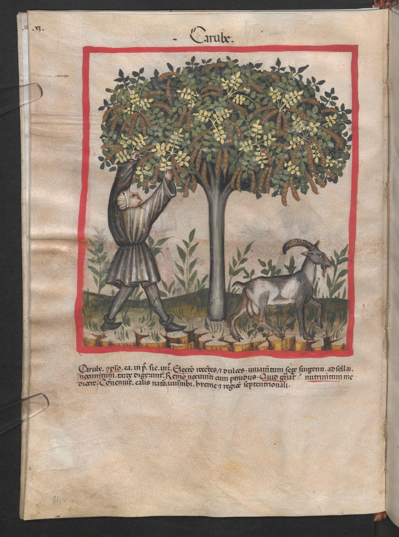 Folio 14v (page 32). Tacuinum sanitatis, Codex Vindobonensis, series nova 2644. Northern Italy, probably Verona, 1380-1399. Keywords: workers' veil