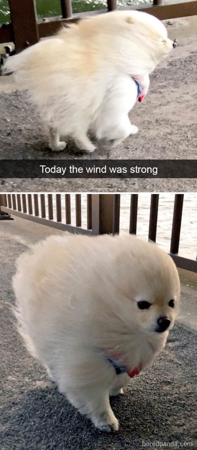 The wind was strong i my niece epic pinterest dog memes