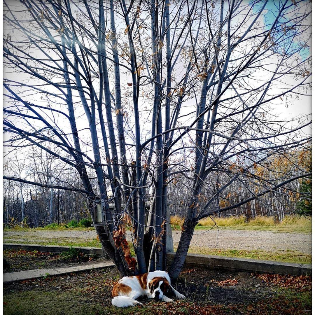 "🦄🧁🖤🇨🇦🦖🐈🐕🐾 on Instagram: ""#dog #dogs #dogsofinstagram #dogstagram #doggy #dogoftheday #ilovedogs #doggo #dogs_of_instagram #doggie #instadog #stbernard #stbernards…"""