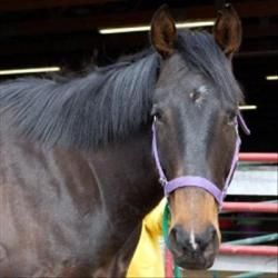 Prince Is An Adoptable Thoroughbred Horse In Des Moines Ia Prince Is A Beautiful Thoroughbred Willing To Go Any Di Animal Rescue League Animal Rescue Animals