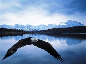 images of alaska - Yahoo Image Search Results
