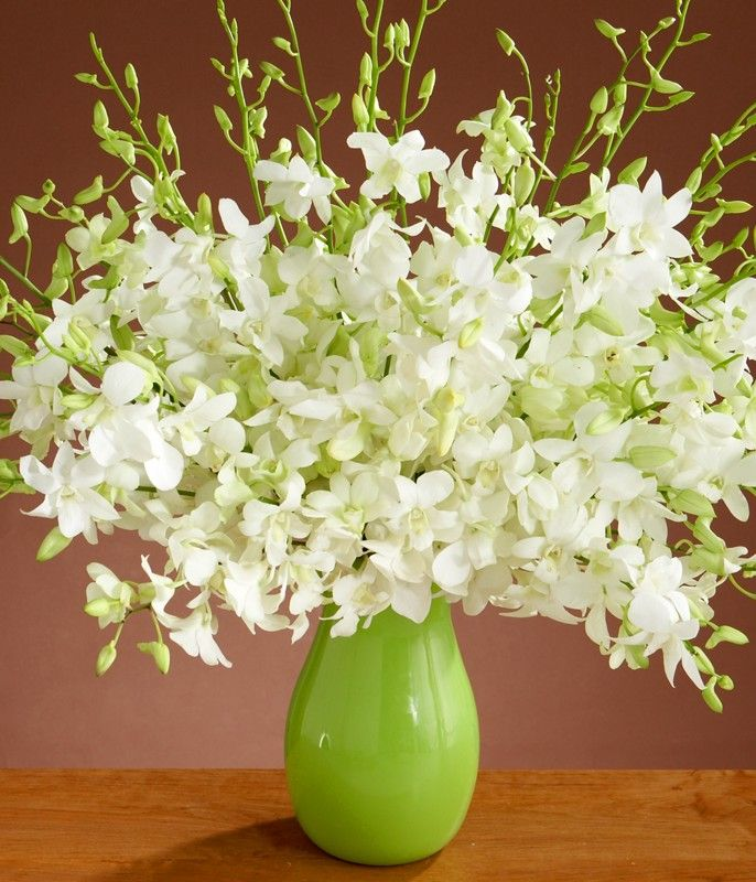 48 Types Of White Flowers