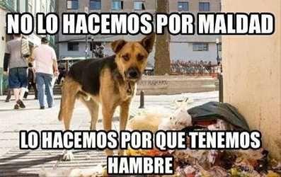 Resultado de imagen para perros de la calle