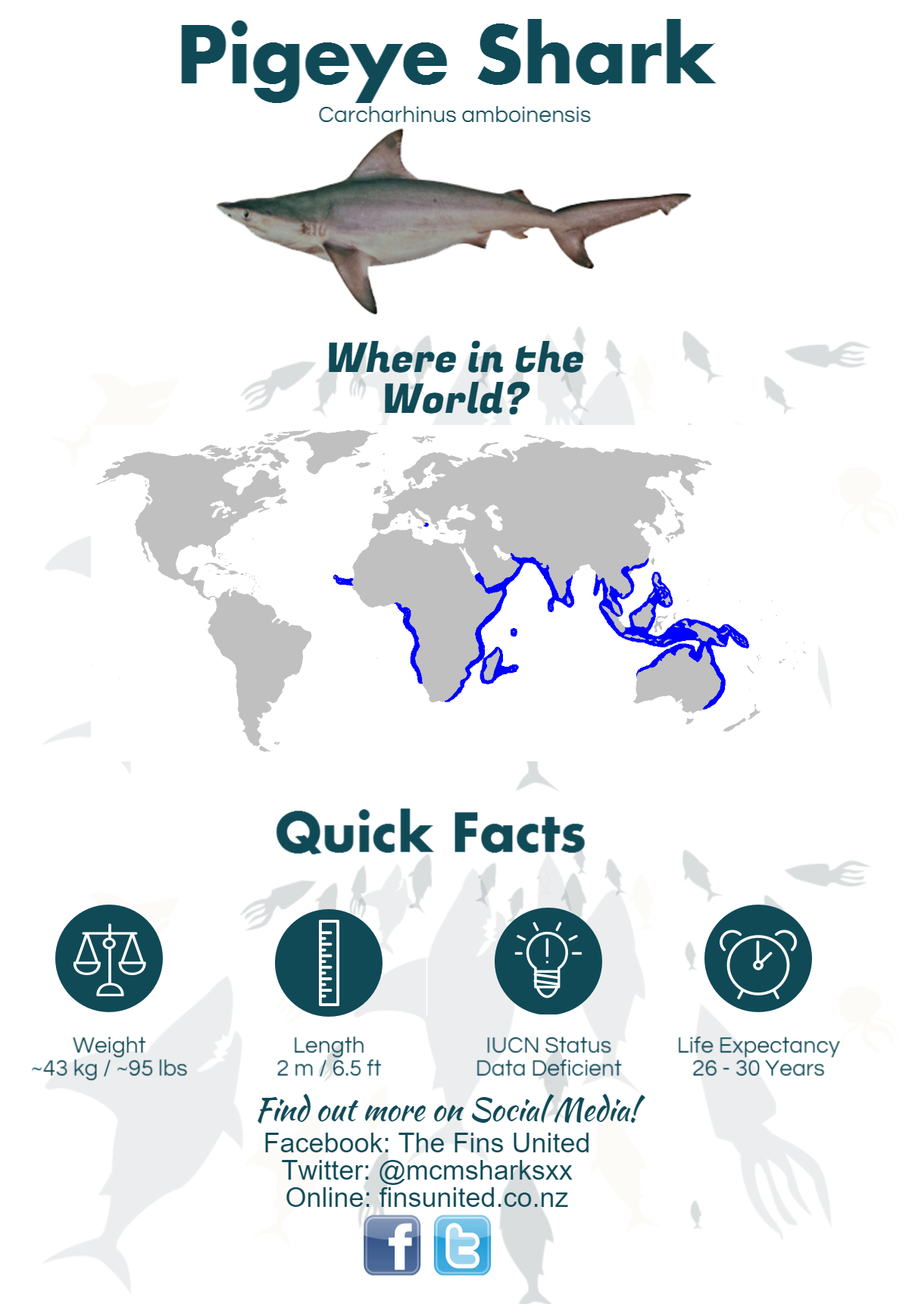 Learn More About The Pigeye Shark With The Fins United