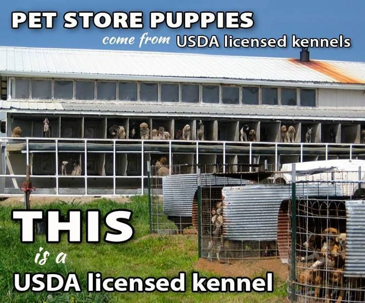 A 'good' puppy mill -- FDA approved yet! Please adopt from a shelter! No such thing as a good puppy mill.