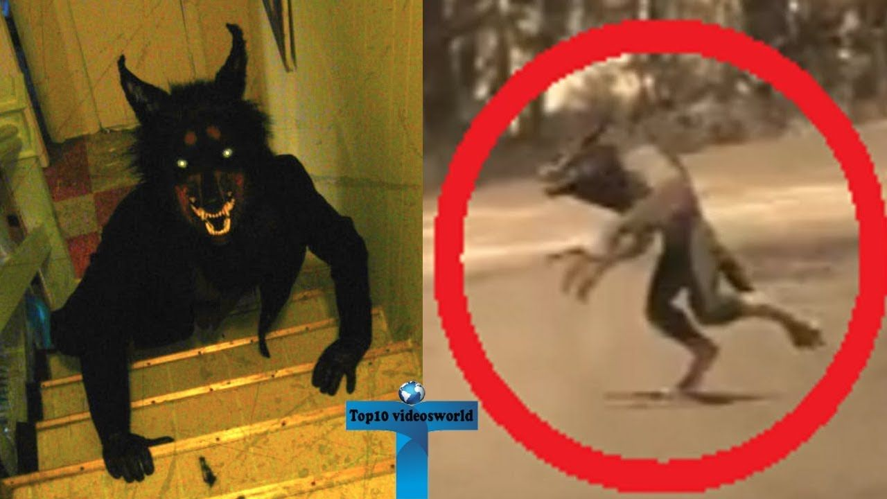 Top 10 Werewolf Caught On Camera Spotted In Real Life Unbelievable M Werewolf Creepy Pictures Paranormal Photos