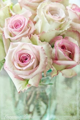 The most beautiful roses ever!