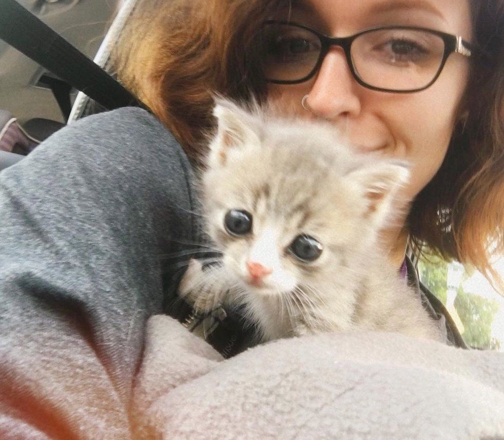 Kitten Found Alone On A Porch Is So Happy To Be Rescued After Meowing For Days Kittens Feeding Kittens Rescue