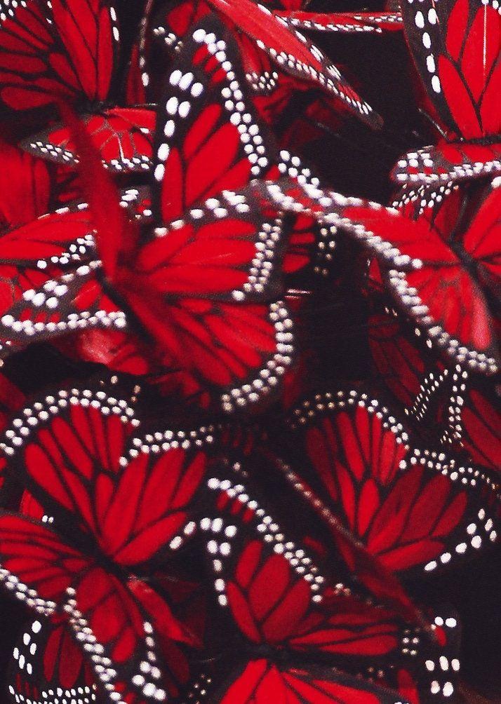 Red Butterflies Red Butterfly Red Aesthetic Beautiful Butterflies