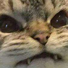 "Photo of Consejos maravillosos sin cargo de Angry Cats, Meme de Angry Cat ""A menudo el dolor …"