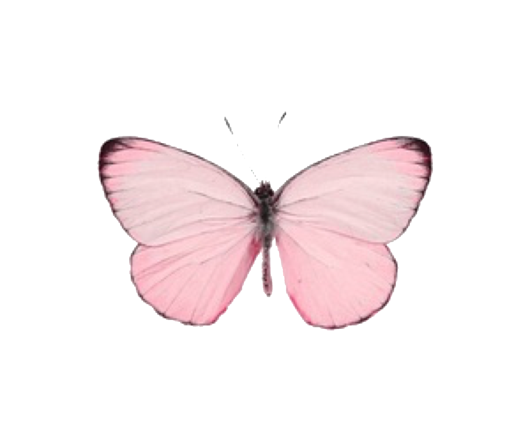 Pink Butterfly Pinkbutterfly Cute Girly Tumblr Aesthetic Bug Remix Freetoedit Remixit Pastel Pink Aesthetic Butterfly Photos Emoji Images