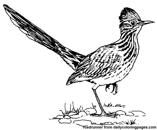 Texas Roadrunner Bird Coloring Pages Png 500 415 Pixels Bird Coloring Pages Roadrunner Art Animal Coloring Books