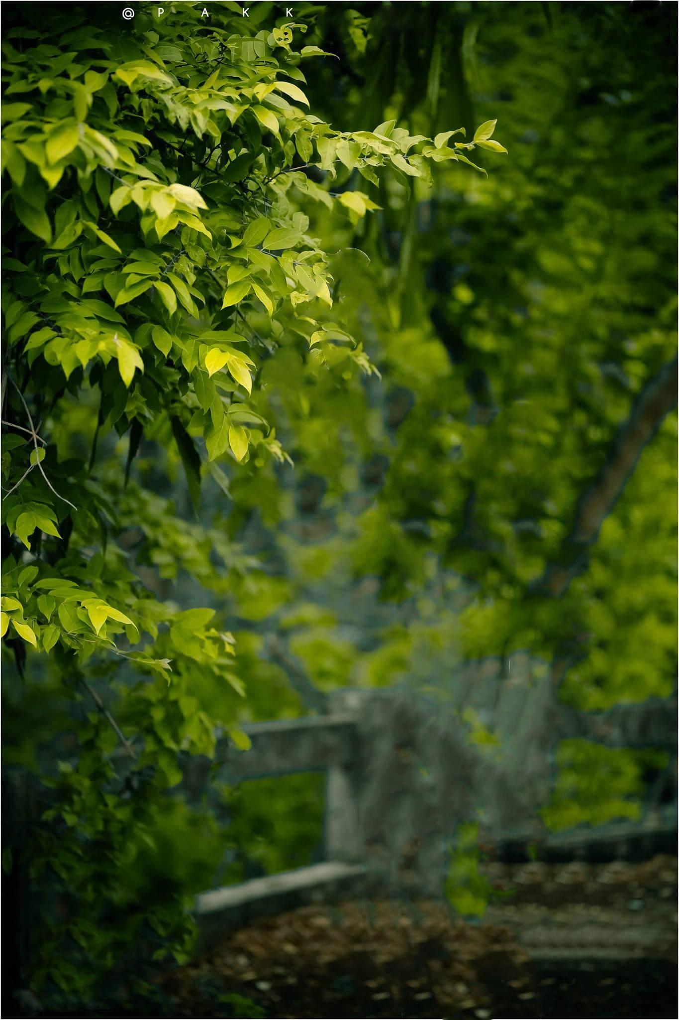 Pin By Phemzyfm John On Creative Dslr Background Images Picsart Background Blur Photo Background
