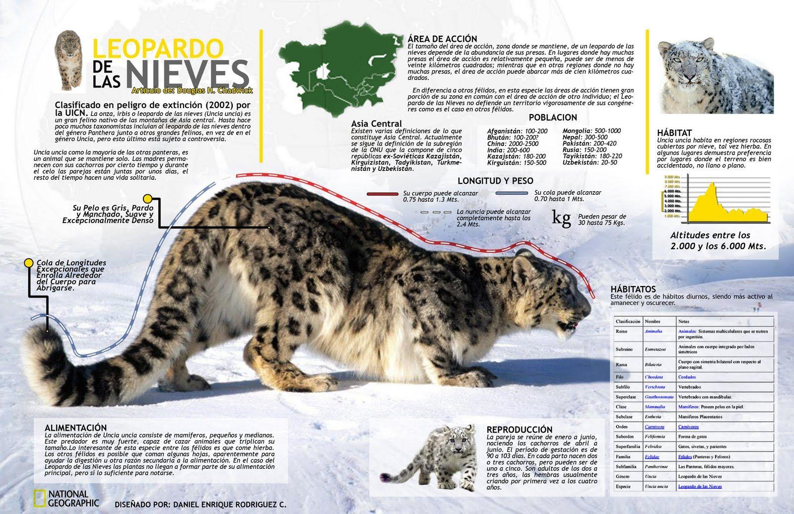 Leopardo de la nieves #infografia #infographic … | Ciencias…
