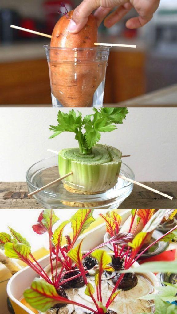 12 Best Veggies Herbs To Regrow From Kitchen Scraps 400 x 300