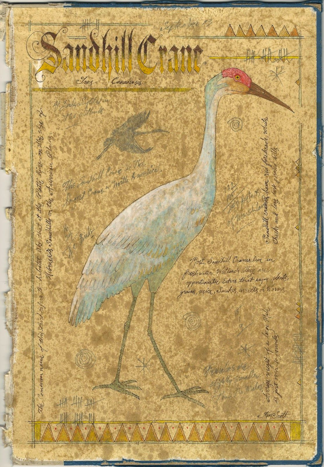 Watercolor books for sale - Here Is An Century Naturalist Painting Of A Sandhill Crane Ink Watercolor Graphite On The I