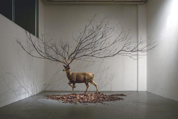 17 Best images about Installation on Pinterest | Installation art ...