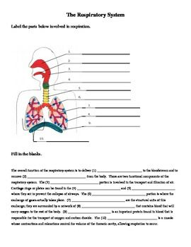 respiratory system labeling and cloze worksheet respiratory system worksheets and sentences. Black Bedroom Furniture Sets. Home Design Ideas