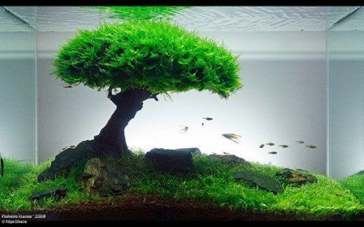 The Basics Of A Planted Aquarium Live Aquarium Plants Planted