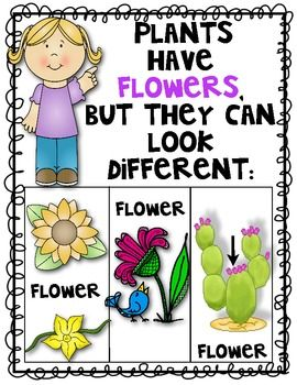Science Plant Posters Set Of 4 Alike And Different Plant Science Kindergarten Science Plants Unit