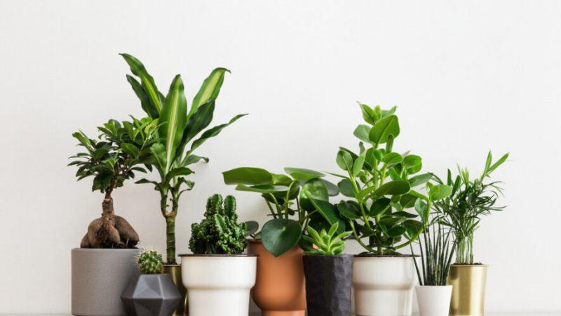 Kwiaty Doniczkowe W Mieszkaniu To Bez Watpienia Jego Ozdoba Ktora Ostatnimi Czasy Kroluje We Wnetrzach Coraz Wiecej Oso Artificial Plants Plants House Plants