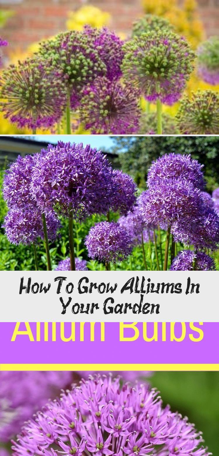 En Blog En Blog In 2020 Long Blooming Perennials Shade Garden Plants Shade Garden