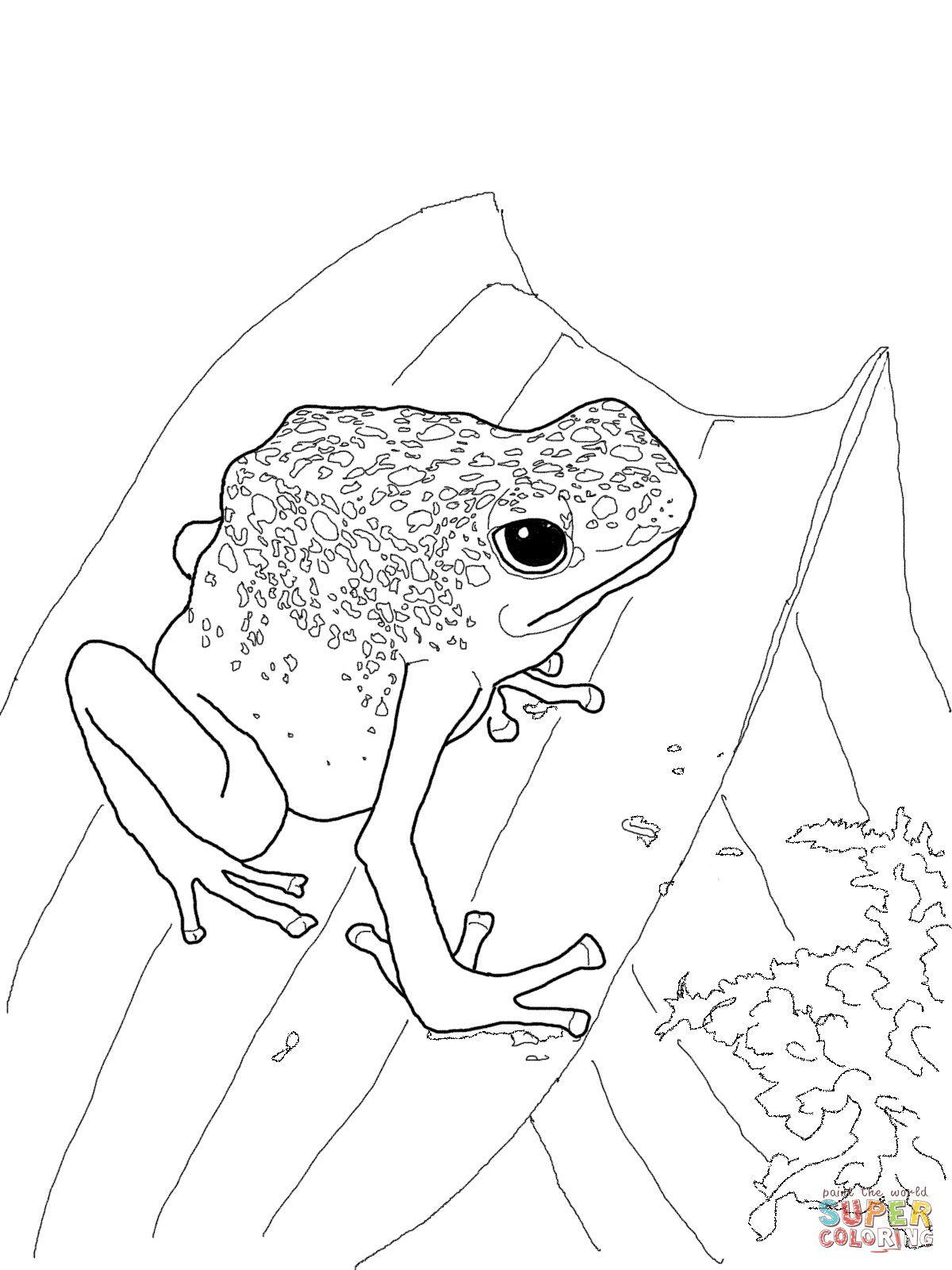 Blue Poison Dart Frog Super Coloring Frog Coloring Pages Blue