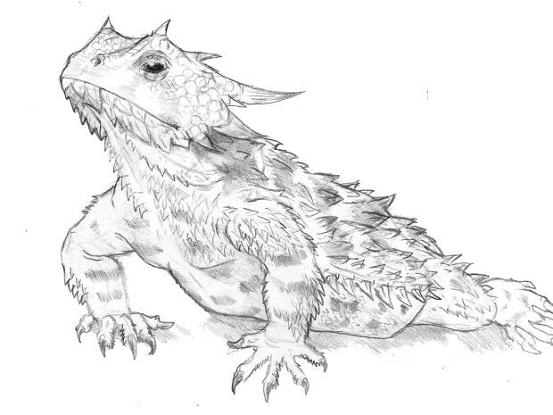 91595 Clipartimage Com Lizard Clipart Horned Lizard Clipart