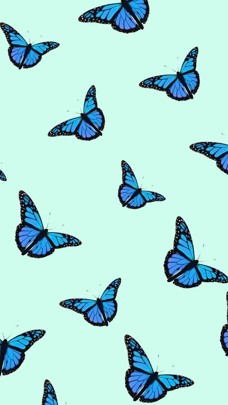 Iphone Wallpaper Collage Hintergrundbildiphone Tapete Blue Butterfly Wallpaper Butterfly Wallpaper Iphone Lock Screen Wallpaper Iphone