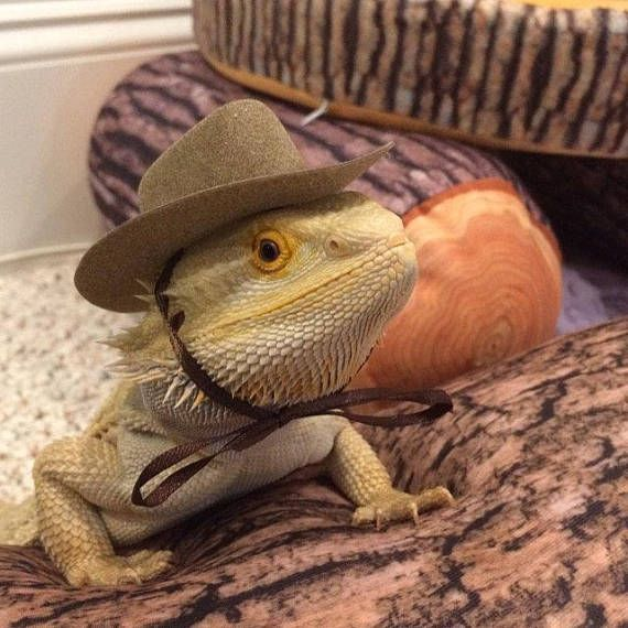 4c4e6494ab1 Cowboy Hats for your Bearded Dragon
