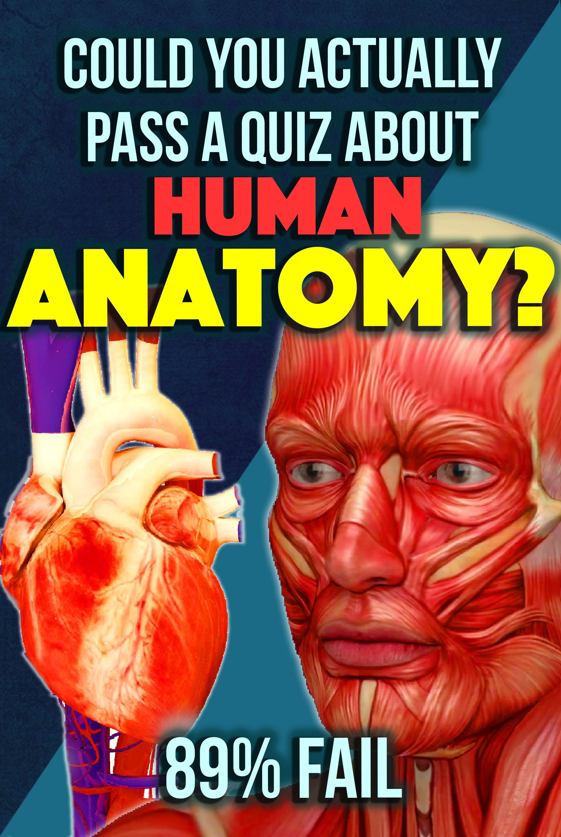 Quiz Could You Actually Pass A Quiz About Human Anatomy 89 Fail