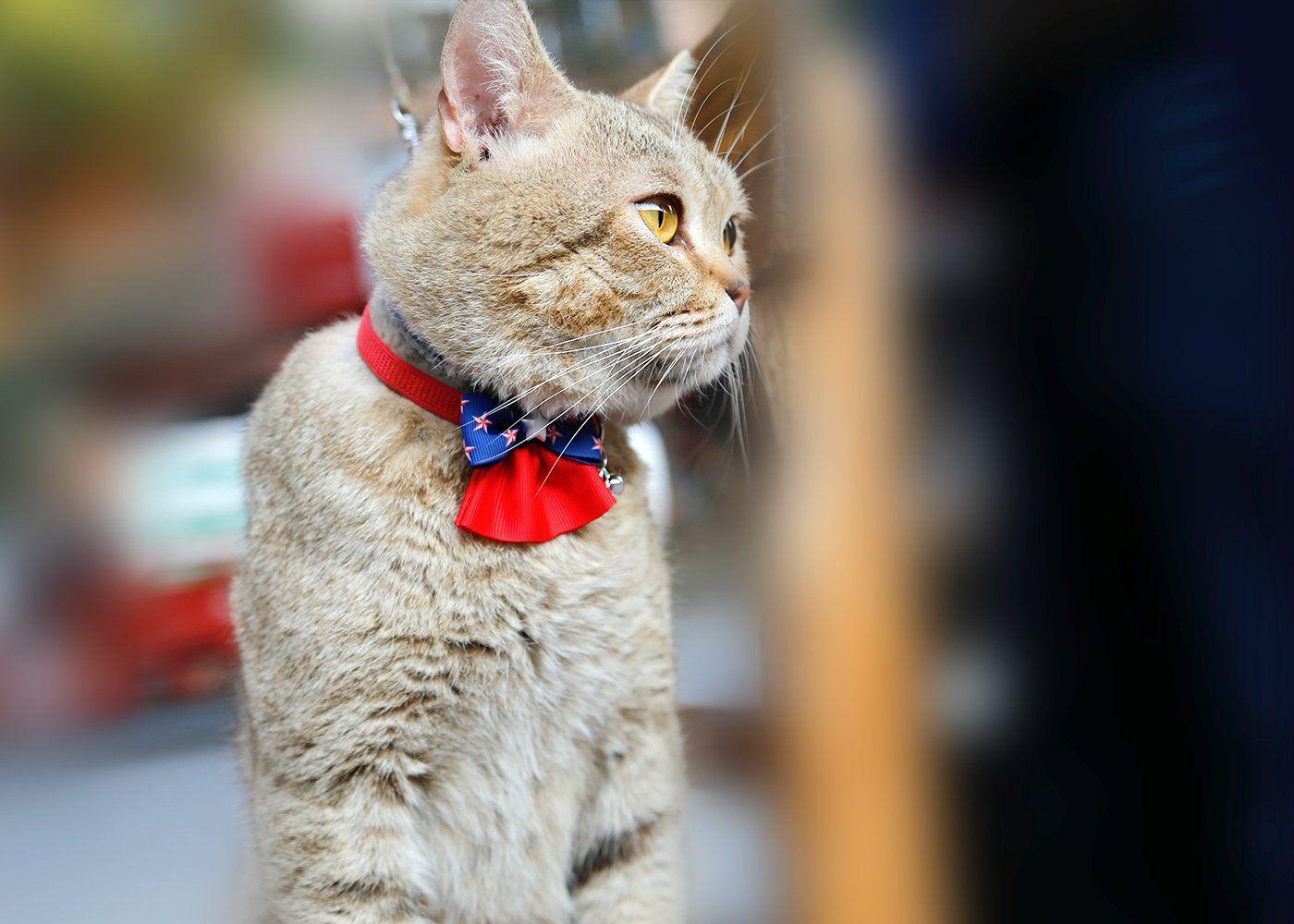Siayi Cat Collar Adjustable Belt 812 Bowtie Kitten Collar Breakaway Pet Collar For Most Cats And Baby Puppies With Bell In 2020 Cat Collars Kitten Collars Pet Collars