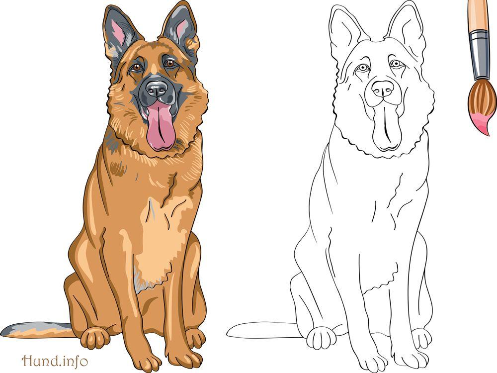 Ausmalbilder mit Hunden | Malvorlagen | Pinterest ...