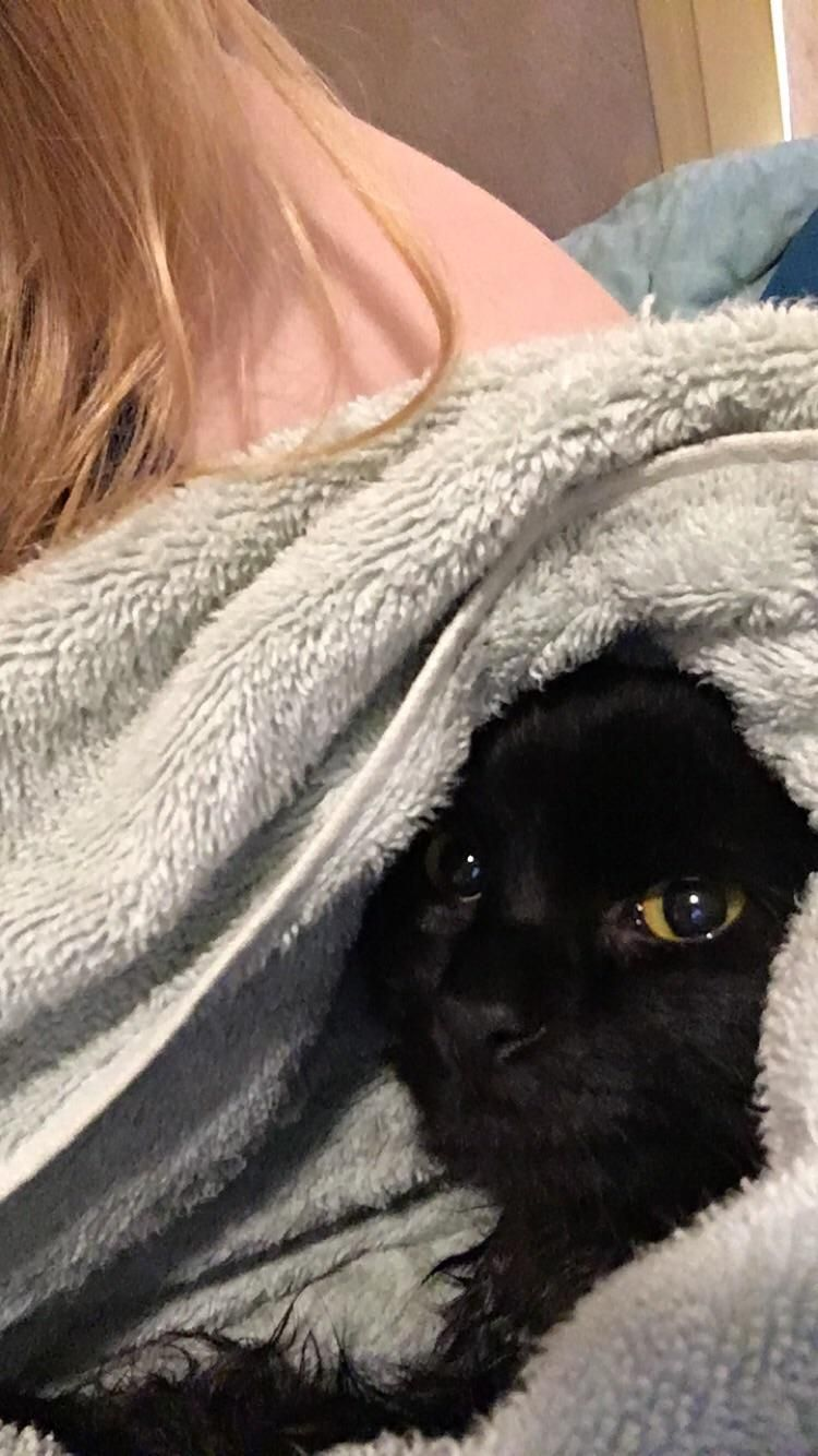 My Little Baby Bear Happy As A Clam Snuggled In A Pre Heated Towel After A Bath Hello There Bright People Are You Catlover Or Have You Cat Having Kittens Black
