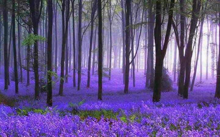 The Black Forest in Germany from Our Spectacular World on facebook xx