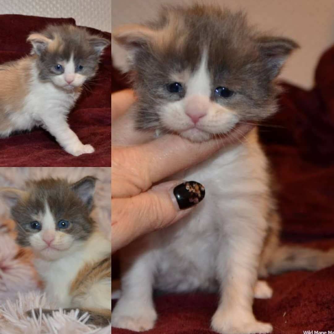 Follow Kittens Family Cute Animals Kittens Animals And Pets