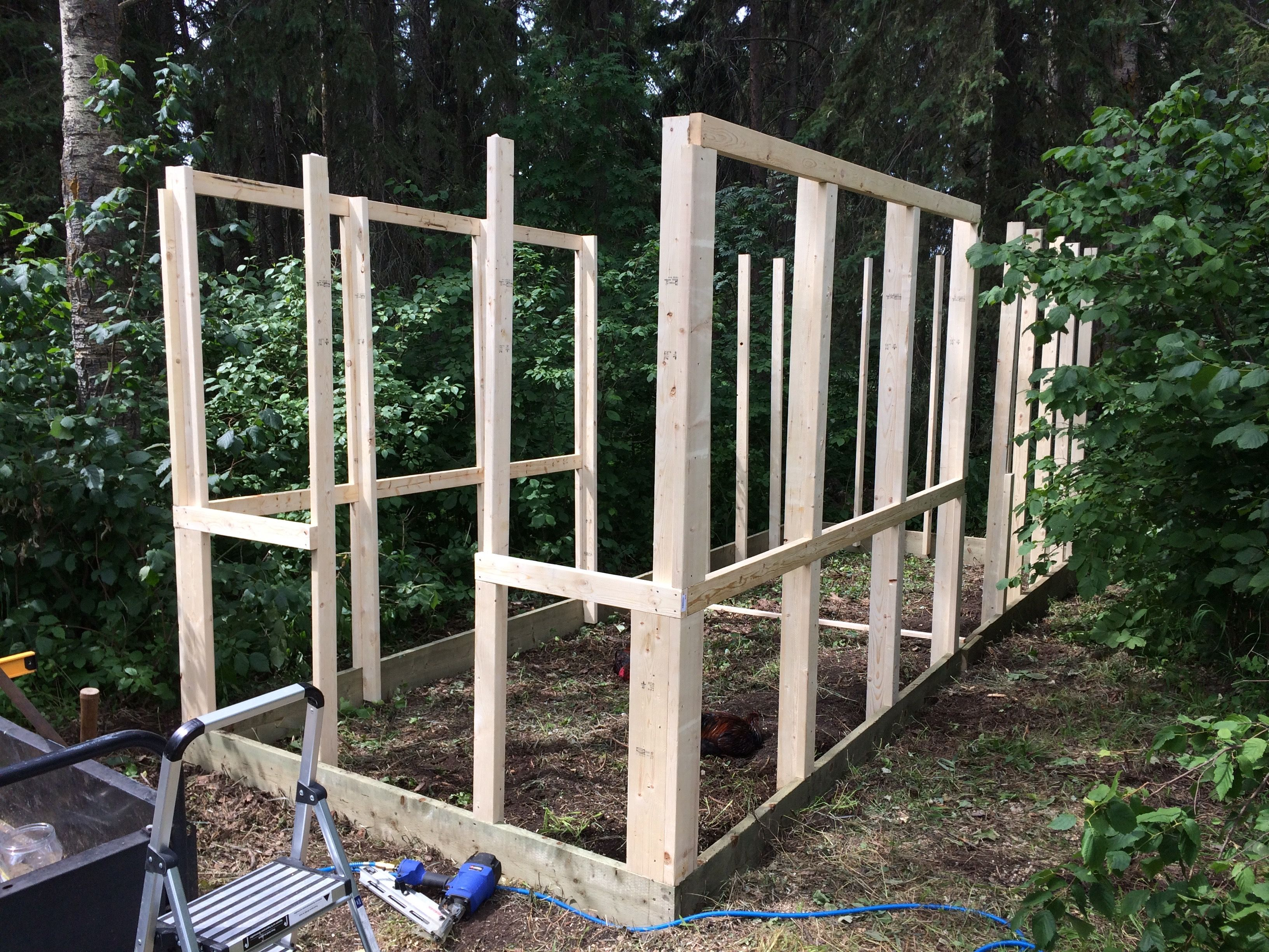 3 Rooster Chicken Coop Framing Stud Walls And Cross Pieces This Will Be Followed By Some Roofing Cross Members To Support Netti Stud Walls Coop Chicken Coop
