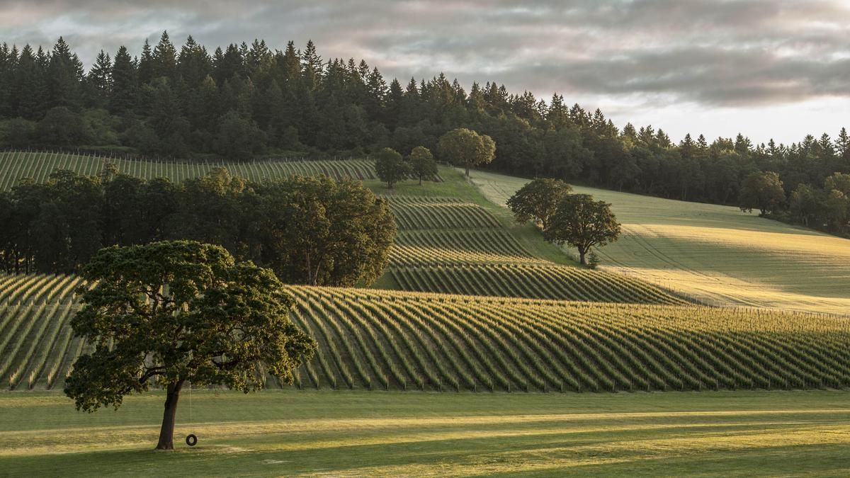 America S Pacific Northwest Overflows With Great Wines Dayton Business Journal Oregon Road Trip Long Island Winery Oregon Wine Country