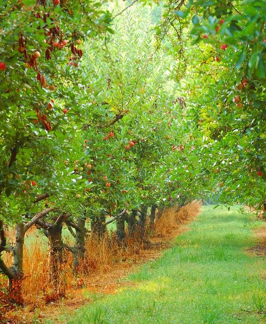 Twould Love An Orchard Imagine Spreading A Blanket Between The Trees And Having A Picnic Or Just Reading A Book Orchard Farm Gardens Wild Flowers