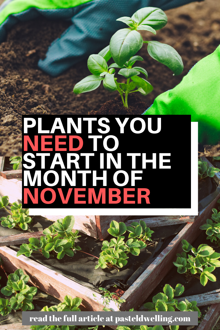 What To Sow And Grow In The Month Of November Plants Lawn Soil Garden