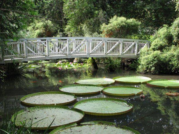 Kanapaha Botanical Gardens Gainesville, FL