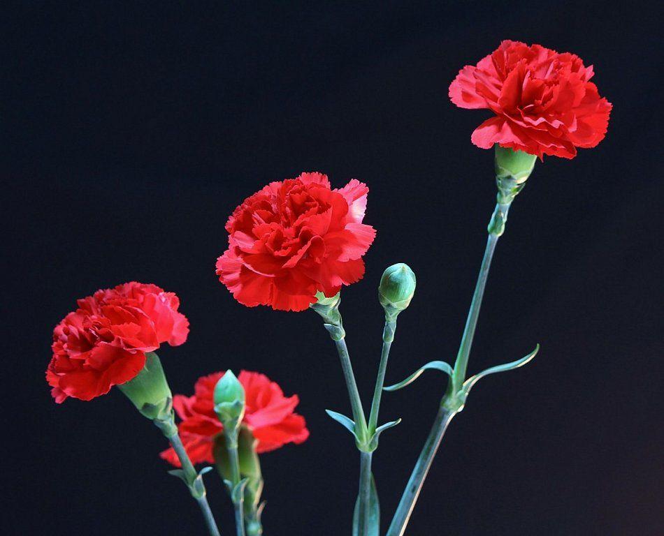 Resultado de imagen de postales de bellos claveles