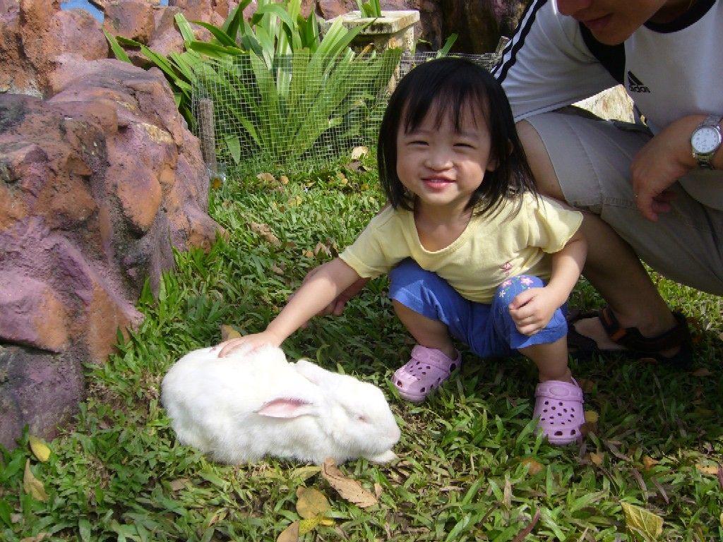 girl petting rabbit in spring Zoo animals, Petting zoo