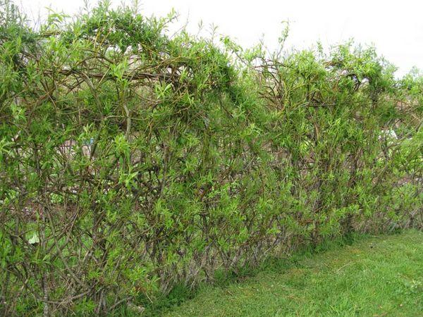 Ganz und zu Extrem Weidenzaun selber machen für eine natürliche Gartengestaltung &PT_03