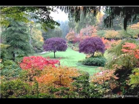 beautiful flower garden video youtube about four and ahalf min nice