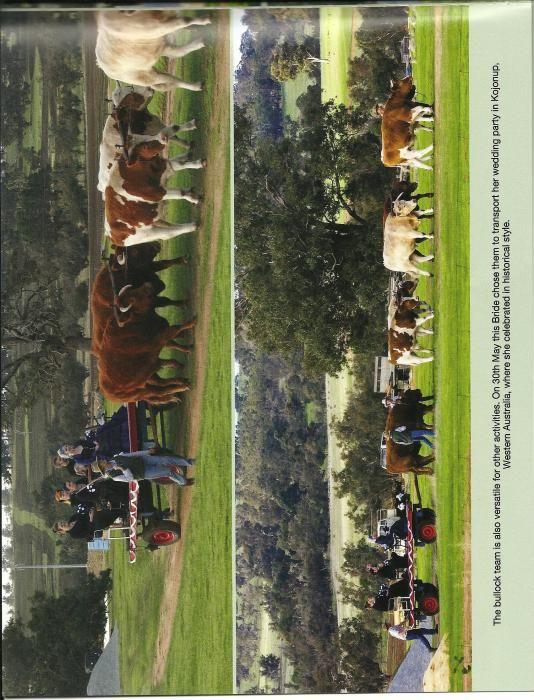 Bullock Team For Sale