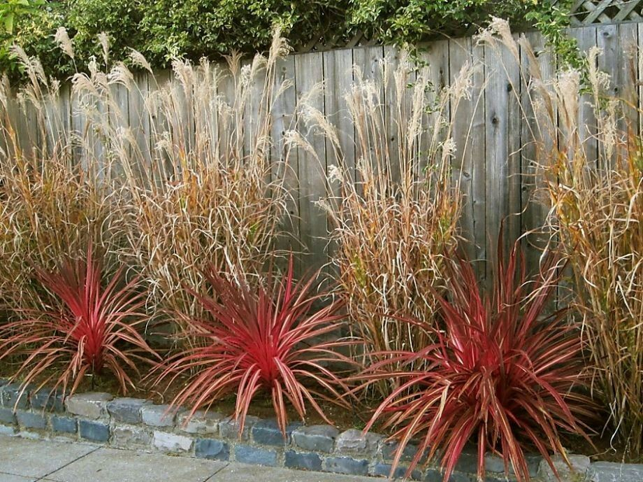 Photo pam peirce by choosing tall narrow porcupine grass for Tall border grass